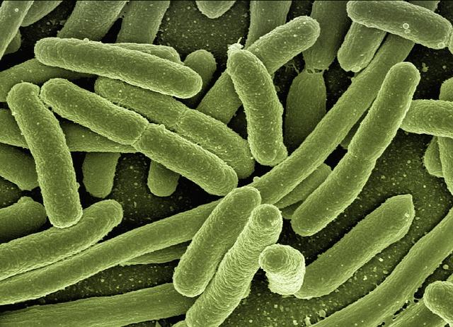 Yersinia Enterocolitica and Hashimoto's disease
