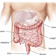 Leaky Gut and Hashimoto's Disease